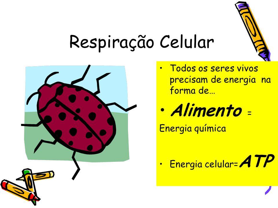 RESPIRAÇÃO CELULAR E FERMENTAÇÃO Claudio Paris – Magrão 27/04/2010 twitter.com/profmagrao MÓDULO BC.2 ÉTICO