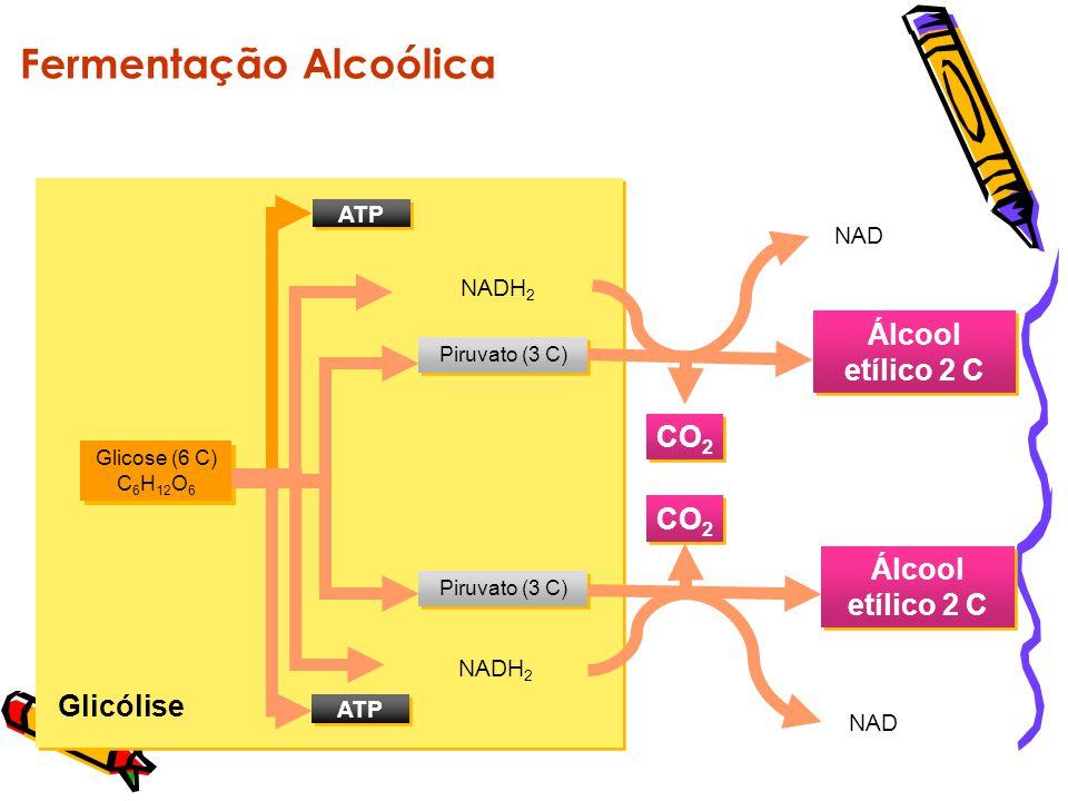 Glicólise Fermentação Lática Glicose (6 C) C 6 H 12 O 6 ATP Piruvato (3 C) NADH 2 Ácido lático 3 C NAD Ácido lático 3 C NAD