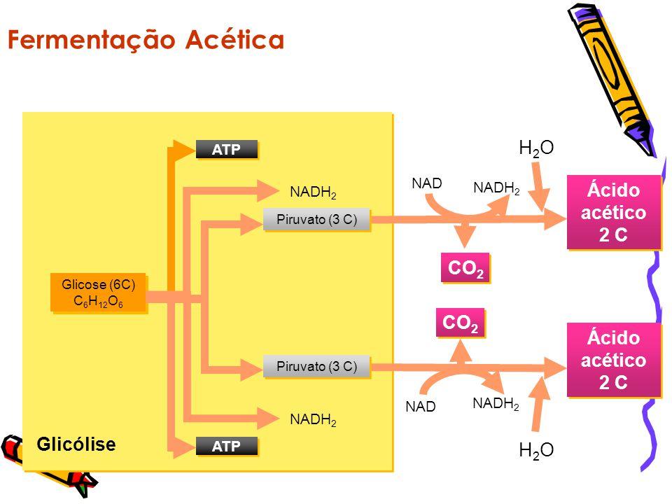 Glicólise Fermentação Alcoólica Glicose (6 C) C 6 H 12 O 6 ATP Piruvato (3 C) NADH 2 CO 2 Álcool etílico 2 C NAD