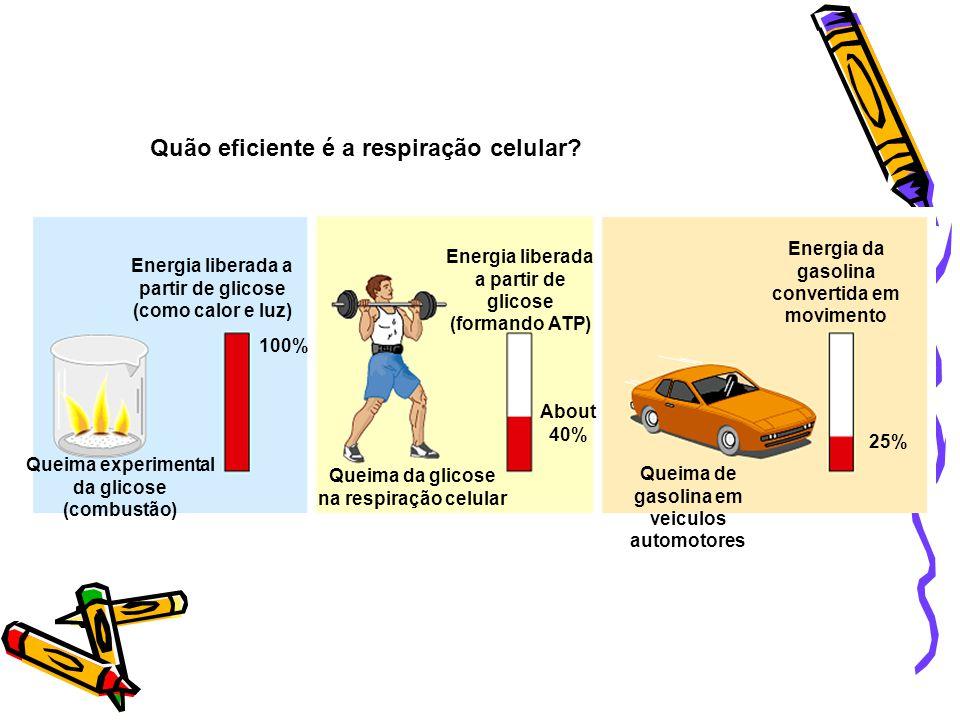 O2O2 CO 2 TROCAS GASOSAS Lungs CO 2 O2O2 Bloodstream Células musculares: recebem O2 e elliminam CO2 RESPIRAÇÃO CELULAR GLICOSE + O 2 ATP + CO 2 + H 2