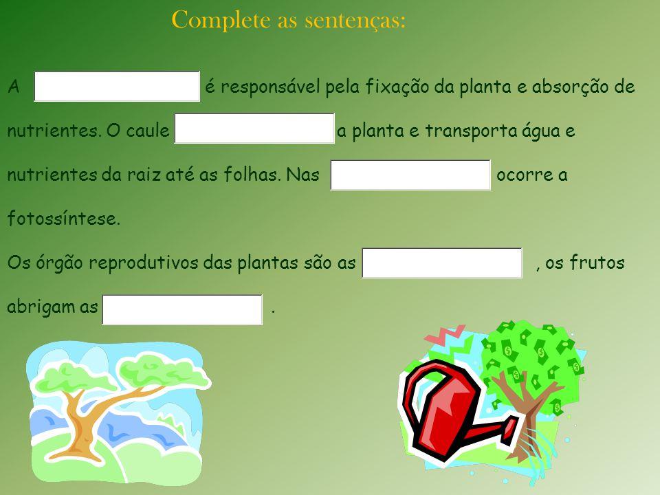 Complete as sentenças: A é responsável pela fixação da planta e absorção de nutrientes. O caule a planta e transporta água e nutrientes da raiz até as