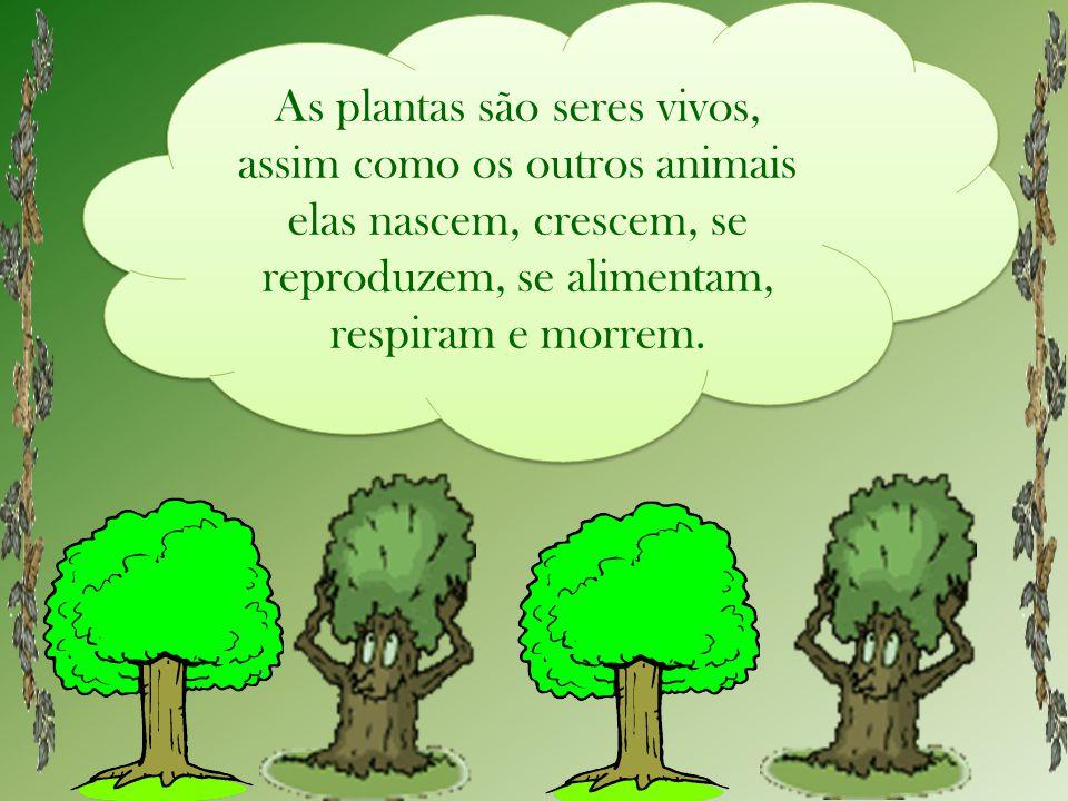 As plantas são seres vivos, assim como os outros animais elas nascem, crescem, se reproduzem, se alimentam, respiram e morrem.