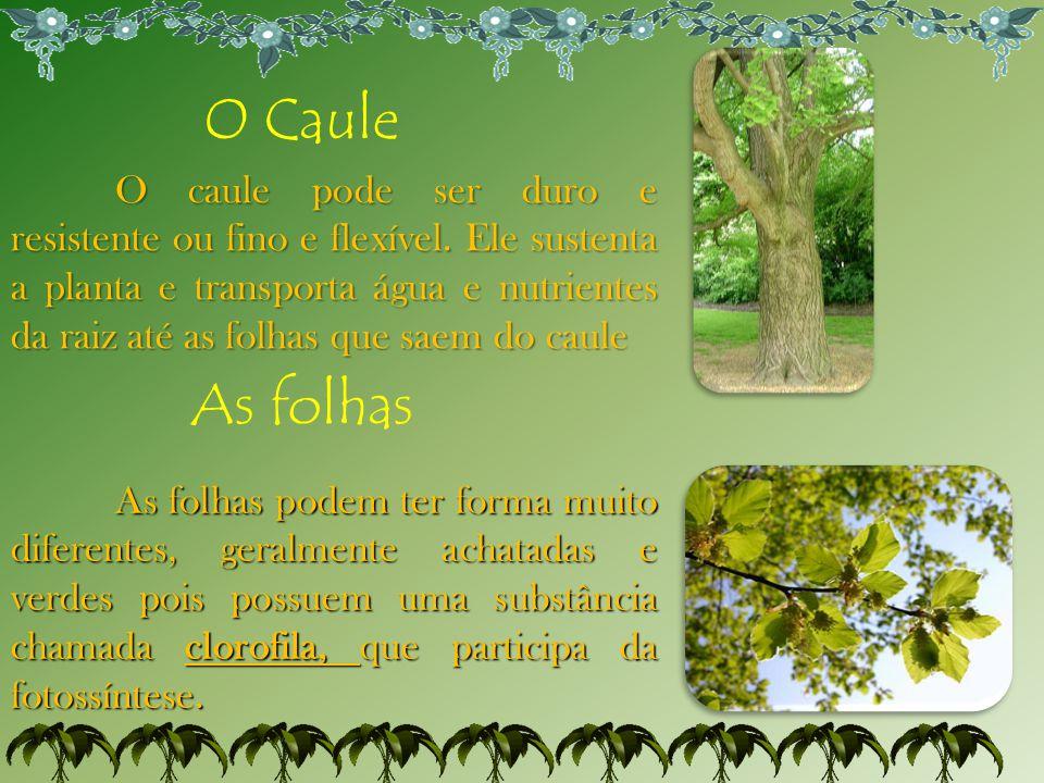 O Caule O caule pode ser duro e resistente ou fino e flexível. Ele sustenta a planta e transporta água e nutrientes da raiz até as folhas que saem do