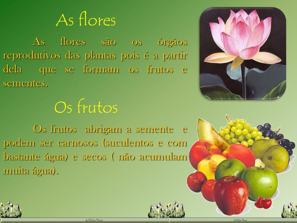 As flores As flores são os órgãos reprodutivos das plantas pois é a partir dela que se formam os frutos e sementes. Os frutos Os frutos abrigam a seme