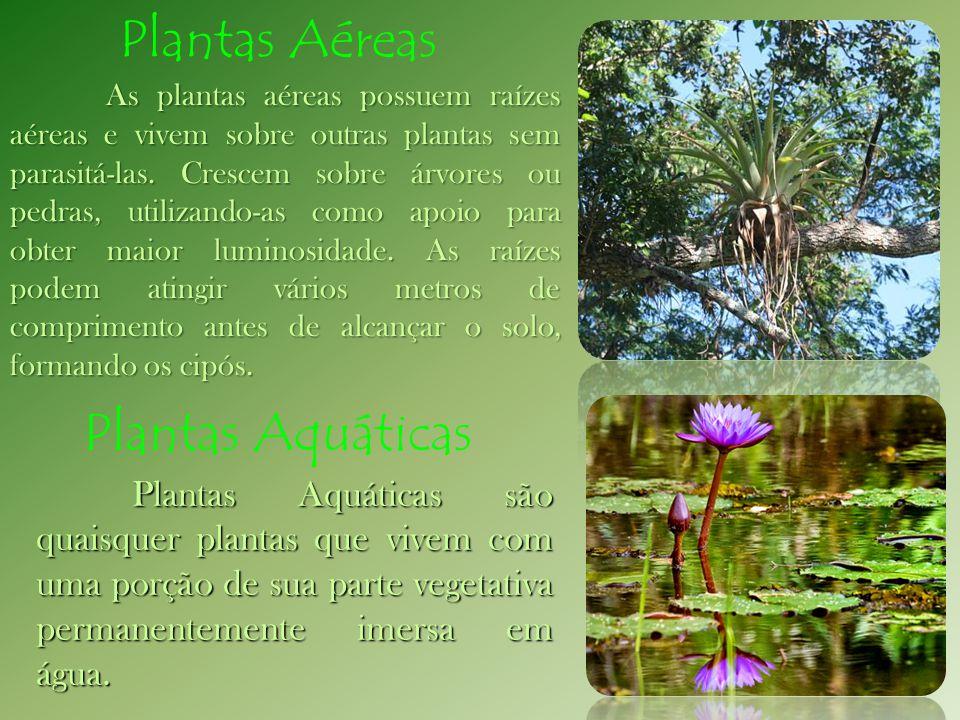 As plantas aéreas possuem raízes aéreas e vivem sobre outras plantas sem parasitá-las. Crescem sobre árvores ou pedras, utilizando-as como apoio para