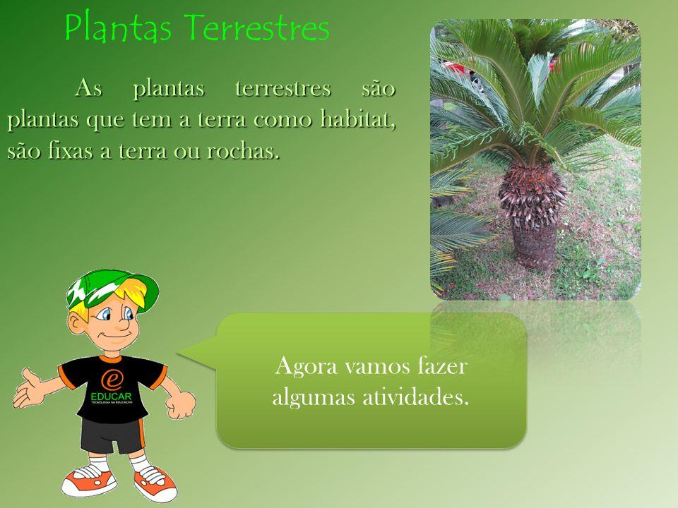 Agora vamos fazer algumas atividades. As plantas terrestres são plantas que tem a terra como habitat, são fixas a terra ou rochas. Plantas Terrestres