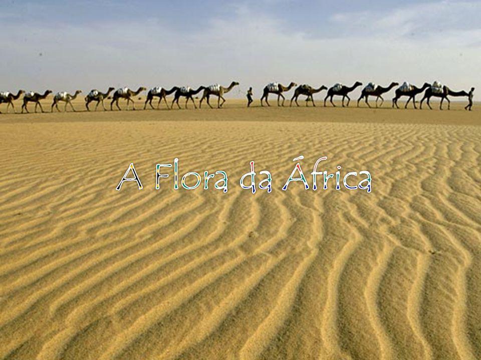 O CLIMA: A África Ocidental está no meio termo entre a floresta tropical e o deserto, ou seja, por lá encontra-se desde desertos úmidos até Florestas tropicais áridas, dentre outros modelos de clima.