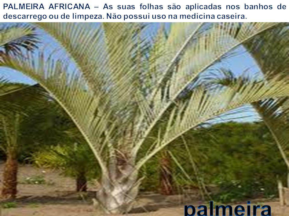 A ESTRELÍCIA é uma planta herbácea muito popular e tradicional, de origem africana.