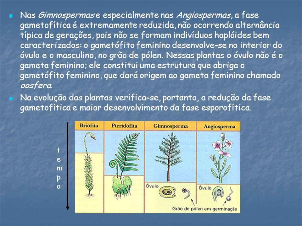 Nas Gimnospermas e especialmente nas Angiospermas, a fase gametofítica é extremamente reduzida, não ocorrendo alternância típica de gerações, pois não se formam indivíduos haplóides bem caracterizados: o gametófito feminino desenvolve-se no interior do óvulo e o masculino, no grão de pólen.