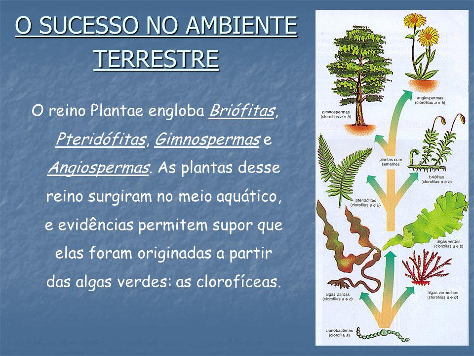 O SUCESSO NO AMBIENTE TERRESTRE O reino Plantae engloba Briófitas, Pteridófitas, Gimnospermas e Angiospermas.