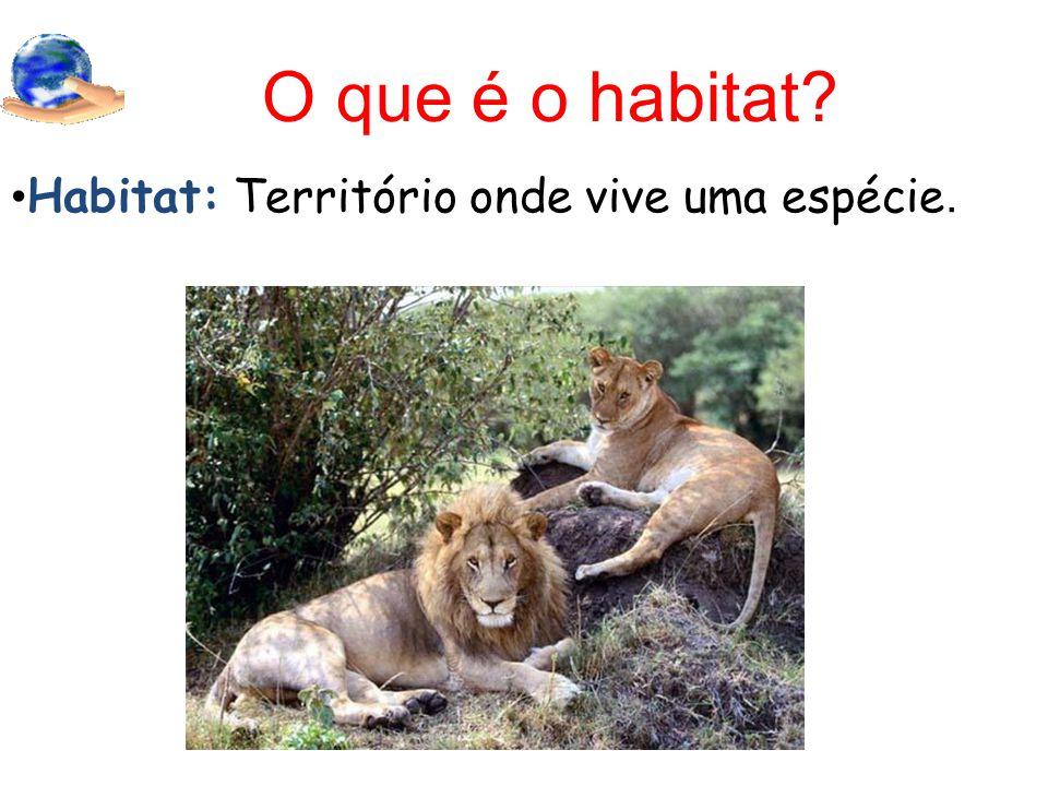O que é o habitat? Habitat: Território onde vive uma espécie.