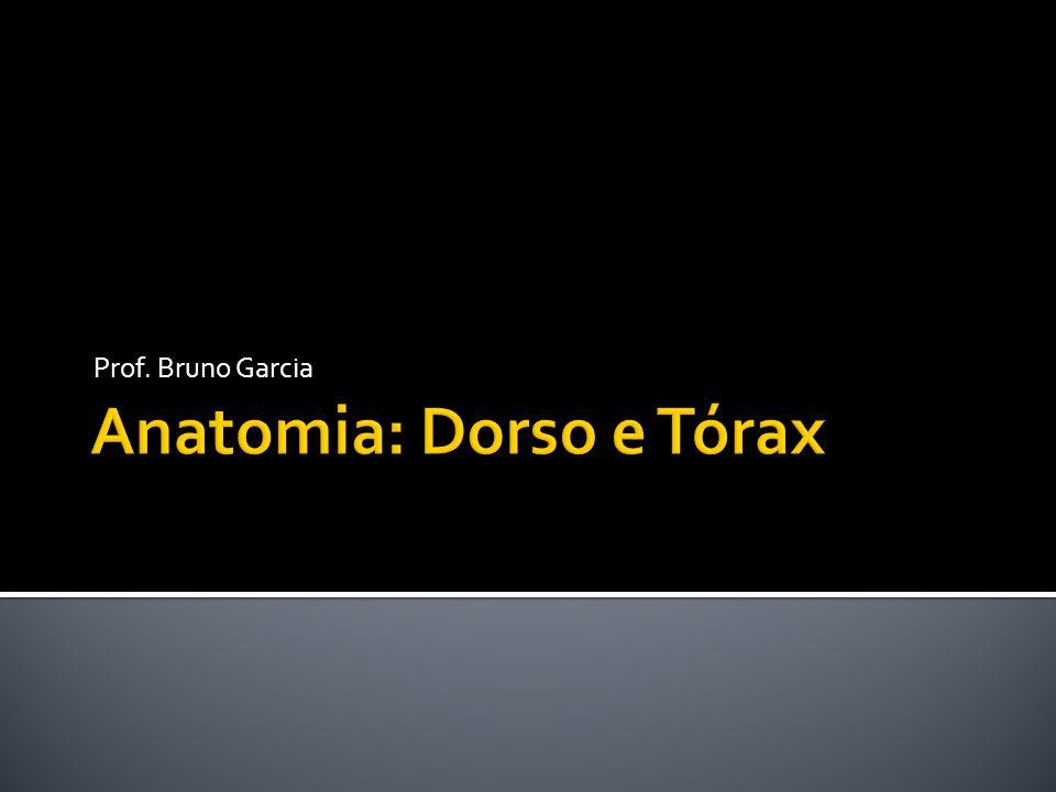 www.sogab.com.br Anatomia: Músculos do Dorso e Tórax Prof. Bruno Garcia Serrátil Anterior