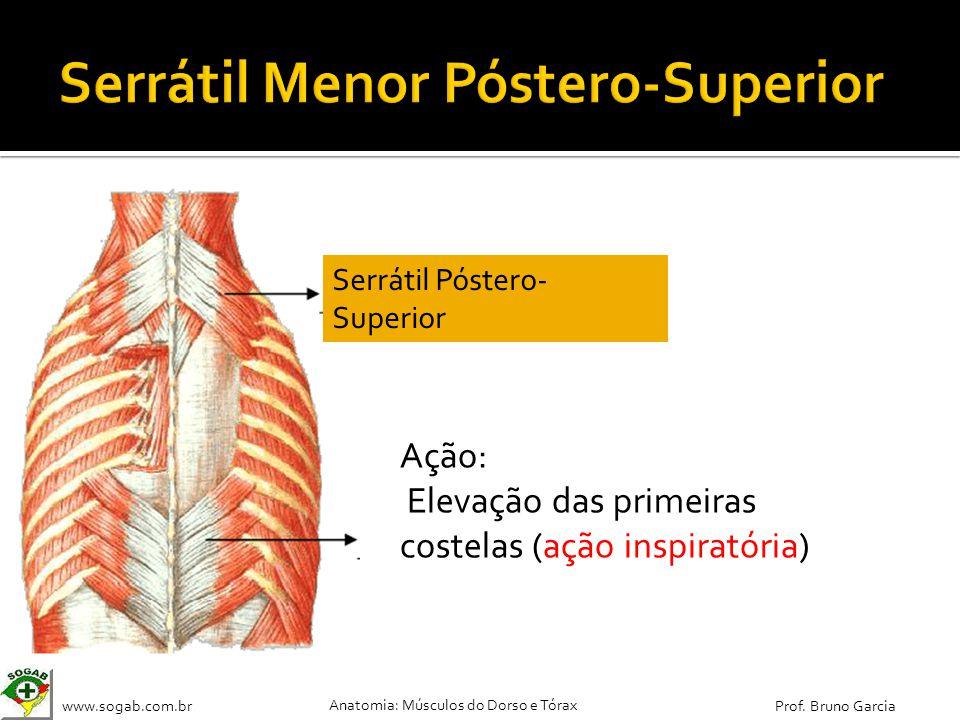 www.sogab.com.br Anatomia: Músculos do Dorso e Tórax Prof. Bruno Garcia Ação: Elevação das primeiras costelas (ação inspiratória) Serrátil Póstero- Su