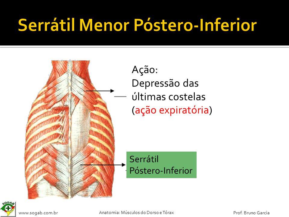 www.sogab.com.br Anatomia: Músculos do Dorso e Tórax Prof. Bruno Garcia Serrátil Póstero-Inferior Ação: Depressão das últimas costelas (ação expiratór