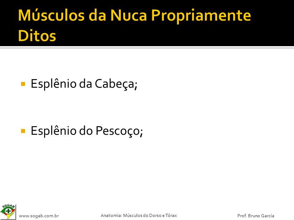 www.sogab.com.br Anatomia: Músculos do Dorso e Tórax Prof. Bruno Garcia Esplênio da Cabeça; Esplênio do Pescoço;