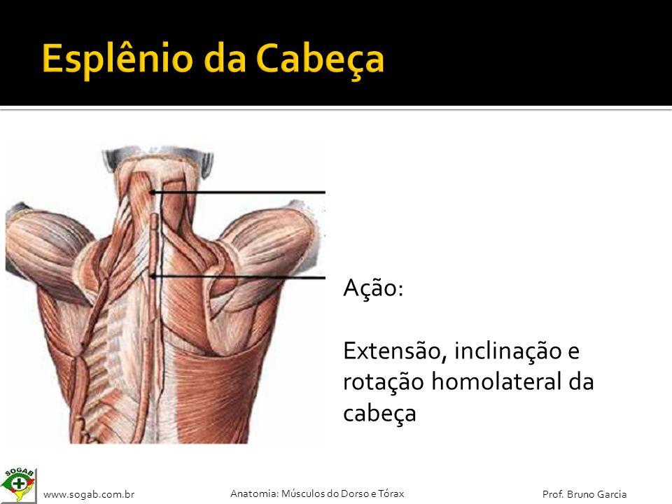 www.sogab.com.br Anatomia: Músculos do Dorso e Tórax Prof. Bruno Garcia Ação: Extensão, inclinação e rotação homolateral da cabeça