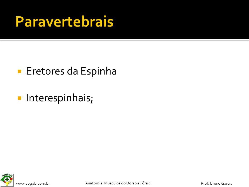 www.sogab.com.br Anatomia: Músculos do Dorso e Tórax Prof. Bruno Garcia Eretores da Espinha Interespinhais;