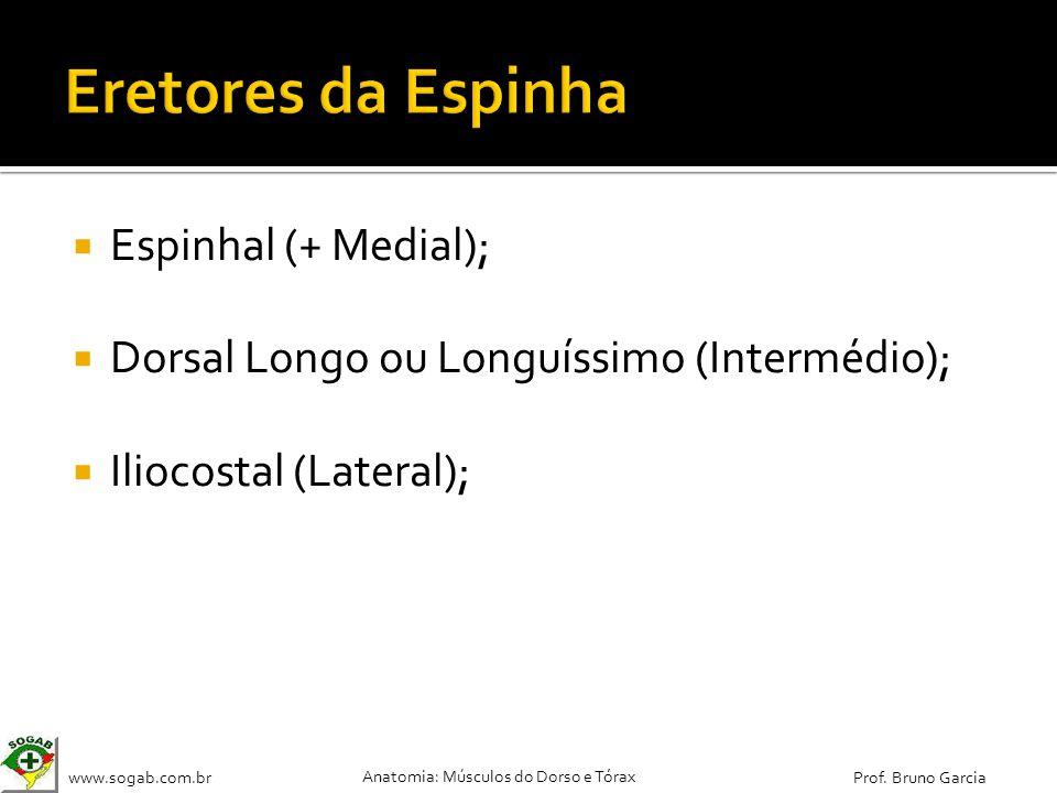 www.sogab.com.br Anatomia: Músculos do Dorso e Tórax Prof. Bruno Garcia Espinhal (+ Medial); Dorsal Longo ou Longuíssimo (Intermédio); Iliocostal (Lat
