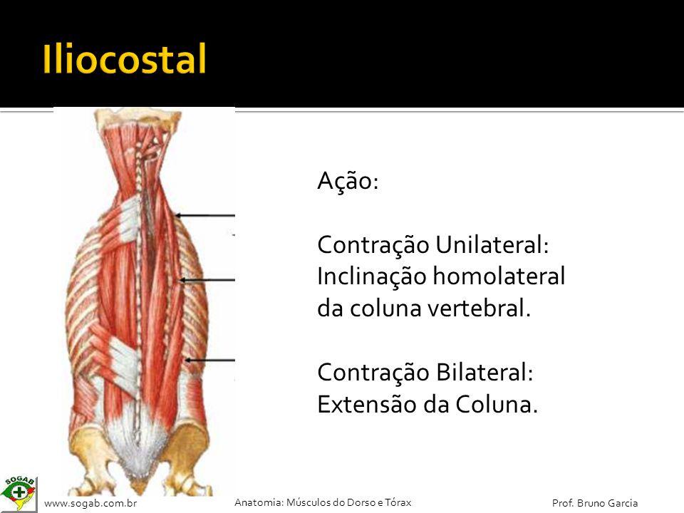 www.sogab.com.br Anatomia: Músculos do Dorso e Tórax Prof. Bruno Garcia Ação: Contração Unilateral: Inclinação homolateral da coluna vertebral. Contra