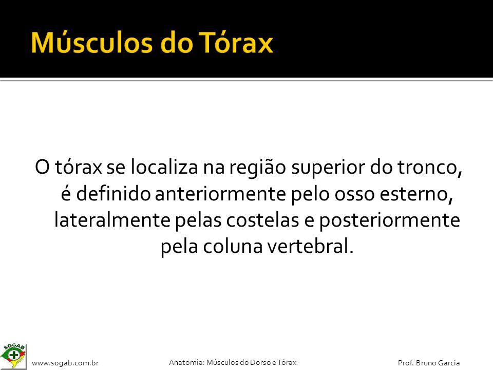 www.sogab.com.br Anatomia: Músculos do Dorso e Tórax Prof. Bruno Garcia O tórax se localiza na região superior do tronco, é definido anteriormente pel
