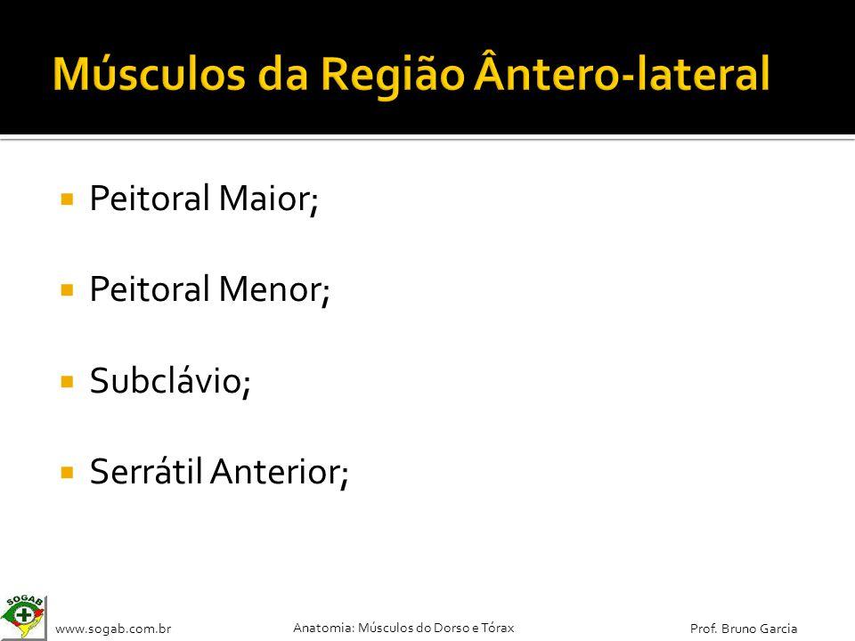 www.sogab.com.br Anatomia: Músculos do Dorso e Tórax Prof. Bruno Garcia Peitoral Maior; Peitoral Menor; Subclávio; Serrátil Anterior;