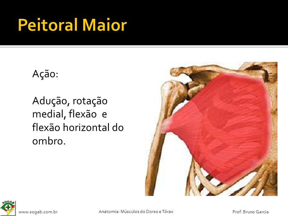 www.sogab.com.br Anatomia: Músculos do Dorso e Tórax Prof. Bruno Garcia Ação: Adução, rotação medial, flexão e flexão horizontal do ombro.