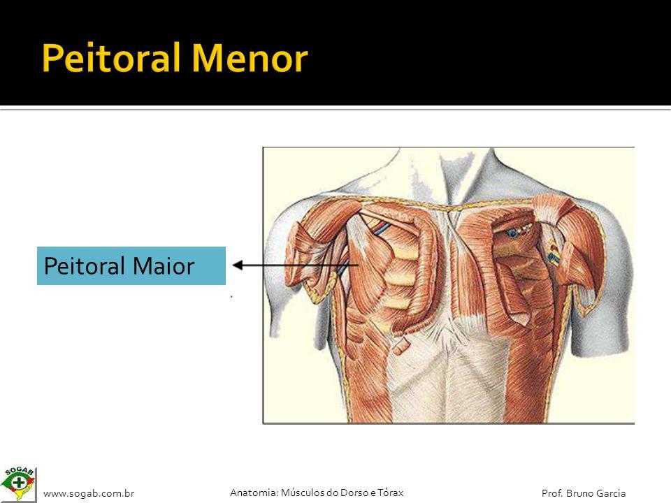 www.sogab.com.br Anatomia: Músculos do Dorso e Tórax Prof. Bruno Garcia Peitoral Maior