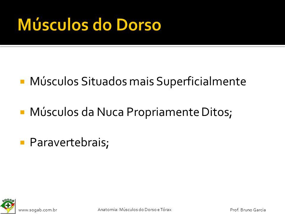 www.sogab.com.br Anatomia: Músculos do Dorso e Tórax Prof. Bruno Garcia Músculos Situados mais Superficialmente Músculos da Nuca Propriamente Ditos; P
