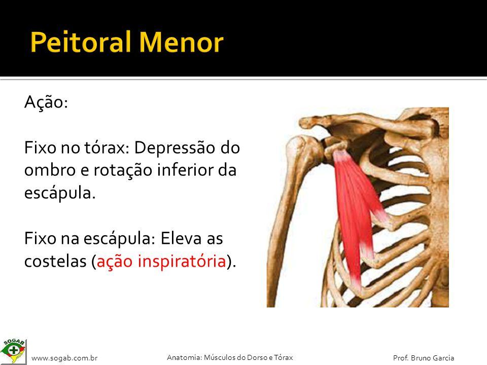 www.sogab.com.br Anatomia: Músculos do Dorso e Tórax Prof. Bruno Garcia Ação: Fixo no tórax: Depressão do ombro e rotação inferior da escápula. Fixo n