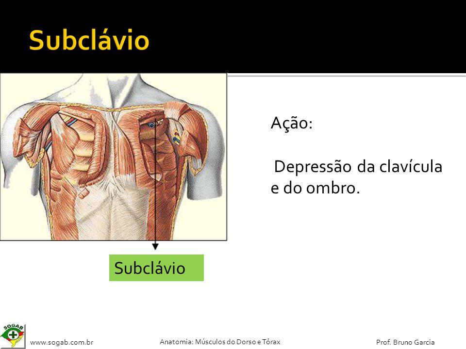 www.sogab.com.br Anatomia: Músculos do Dorso e Tórax Prof. Bruno Garcia Subclávio Ação: Depressão da clavícula e do ombro.