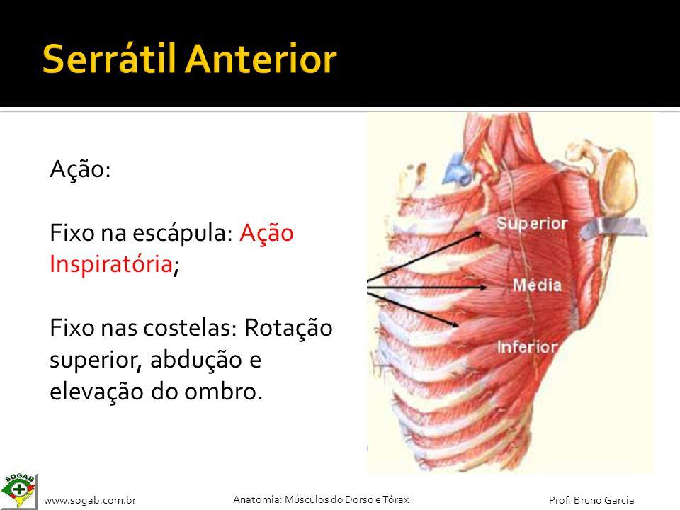 www.sogab.com.br Anatomia: Músculos do Dorso e Tórax Prof. Bruno Garcia Ação: Fixo na escápula: Ação Inspiratória; Fixo nas costelas: Rotação superior