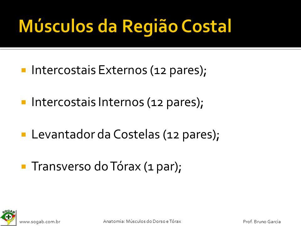 www.sogab.com.br Anatomia: Músculos do Dorso e Tórax Prof. Bruno Garcia Intercostais Externos (12 pares); Intercostais Internos (12 pares); Levantador