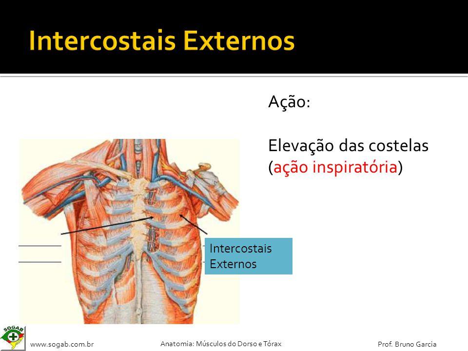 www.sogab.com.br Anatomia: Músculos do Dorso e Tórax Prof. Bruno Garcia Ação: Elevação das costelas (ação inspiratória) Intercostais Externos