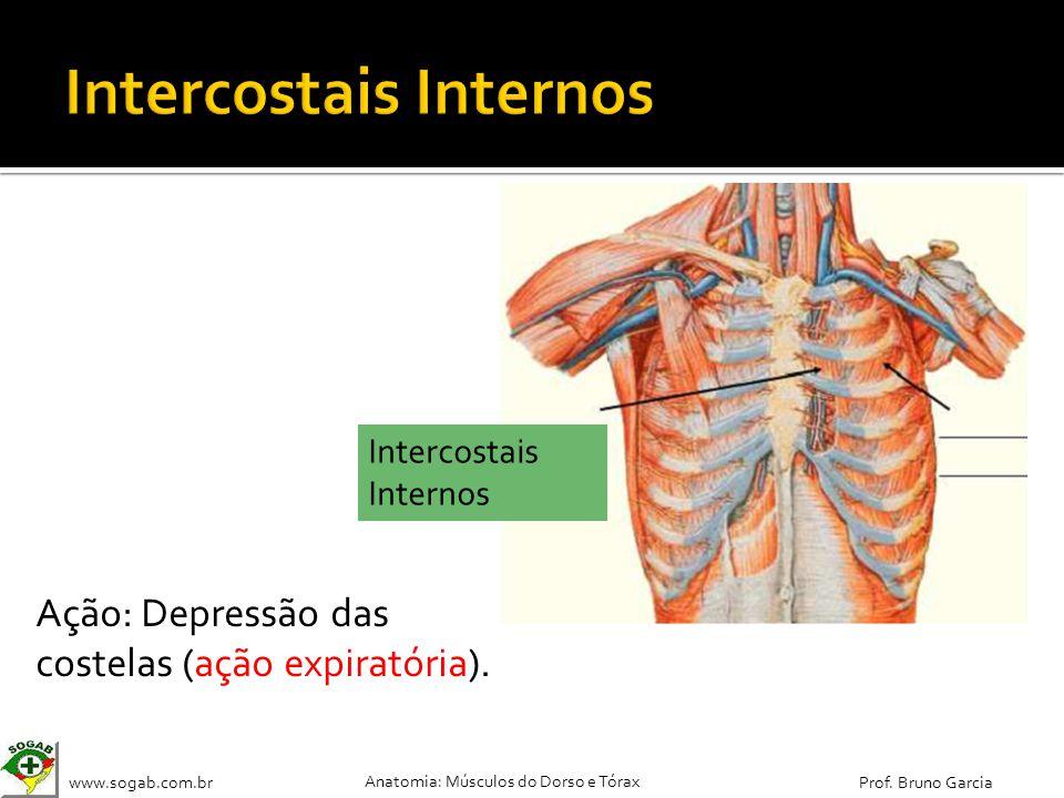 www.sogab.com.br Anatomia: Músculos do Dorso e Tórax Prof. Bruno Garcia Ação: Depressão das costelas (ação expiratória). Intercostais Internos