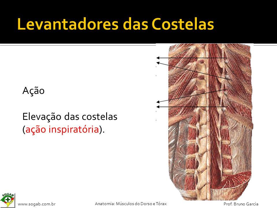 www.sogab.com.br Anatomia: Músculos do Dorso e Tórax Prof. Bruno Garcia Ação Elevação das costelas (ação inspiratória).