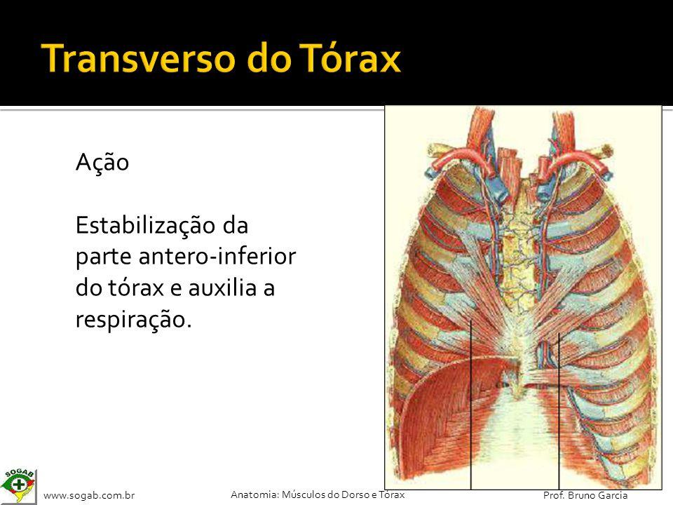 www.sogab.com.br Anatomia: Músculos do Dorso e Tórax Prof. Bruno Garcia Ação Estabilização da parte antero-inferior do tórax e auxilia a respiração.