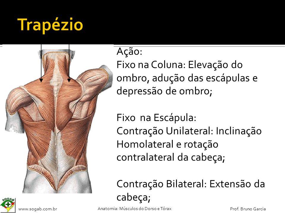 www.sogab.com.br Anatomia: Músculos do Dorso e Tórax Prof. Bruno Garcia Ação: Fixo na Coluna: Elevação do ombro, adução das escápulas e depressão de o