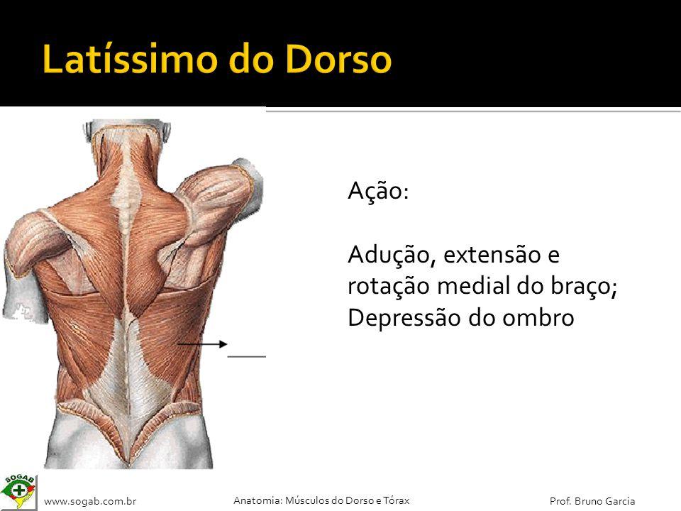 www.sogab.com.br Anatomia: Músculos do Dorso e Tórax Prof. Bruno Garcia Ação: Adução, extensão e rotação medial do braço; Depressão do ombro
