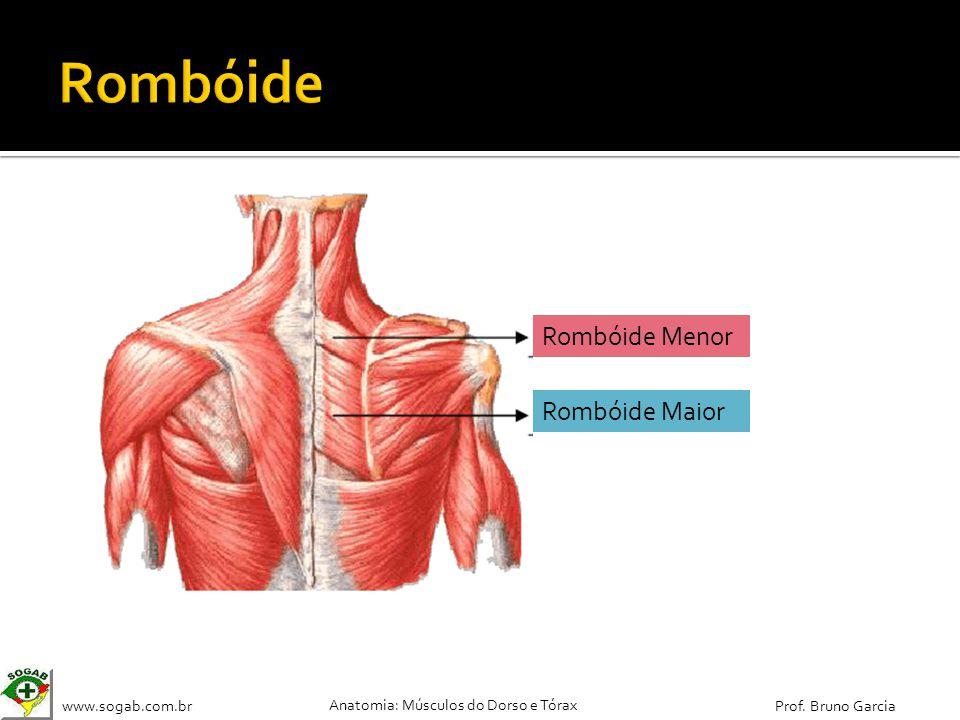 www.sogab.com.br Anatomia: Músculos do Dorso e Tórax Prof. Bruno Garcia Rombóide Maior Rombóide Menor
