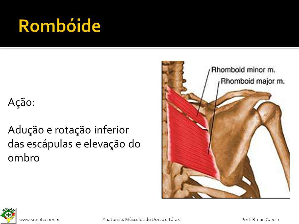 www.sogab.com.br Anatomia: Músculos do Dorso e Tórax Prof. Bruno Garcia Ação: Adução e rotação inferior das escápulas e elevação do ombro