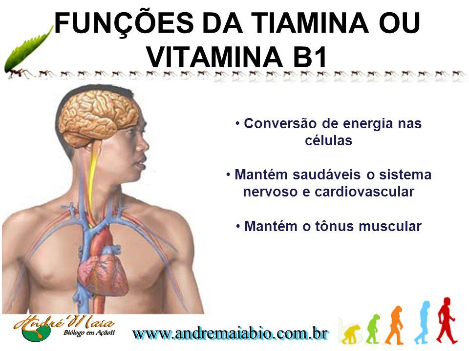 www.andremaiabio.com.brwww.andremaiabio.com.br FUNÇÕES DA TIAMINA OU VITAMINA B1 Conversão de energia nas células Mantém saudáveis o sistema nervoso e