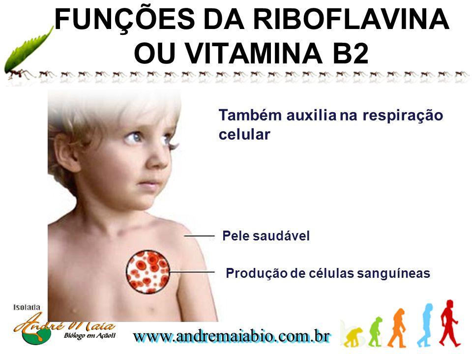 www.andremaiabio.com.brwww.andremaiabio.com.br FUNÇÕES DA RIBOFLAVINA OU VITAMINA B2 Pele saudável Produção de células sanguíneas Também auxilia na re