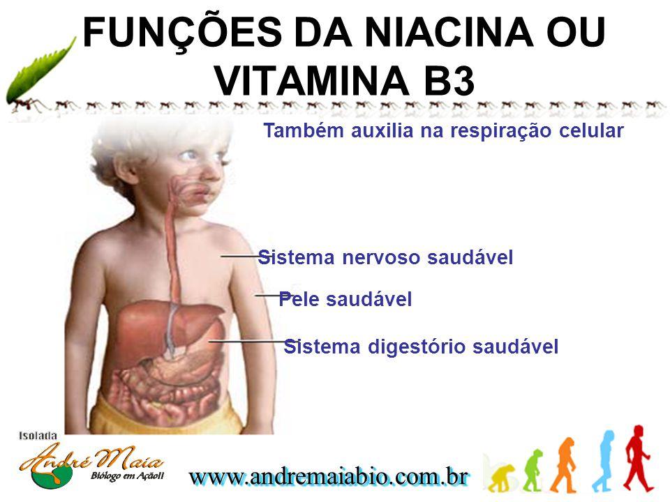 www.andremaiabio.com.brwww.andremaiabio.com.br FUNÇÕES DA NIACINA OU VITAMINA B3 Pele saudável Sistema digestório saudável Sistema nervoso saudável Ta