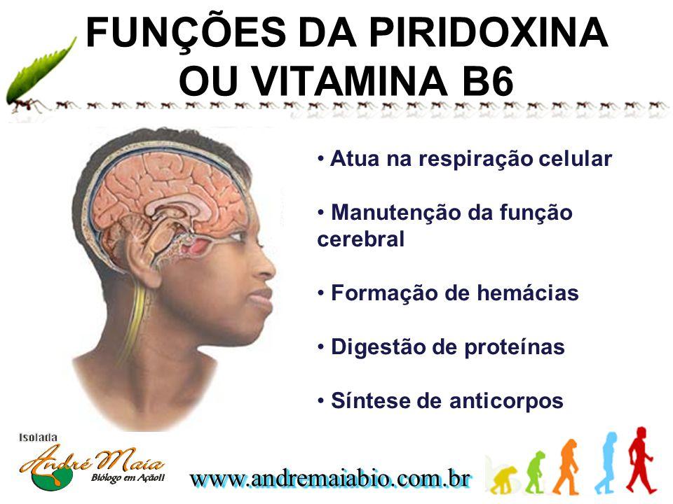www.andremaiabio.com.brwww.andremaiabio.com.br FUNÇÕES DA PIRIDOXINA OU VITAMINA B6 Atua na respiração celular Manutenção da função cerebral Formação