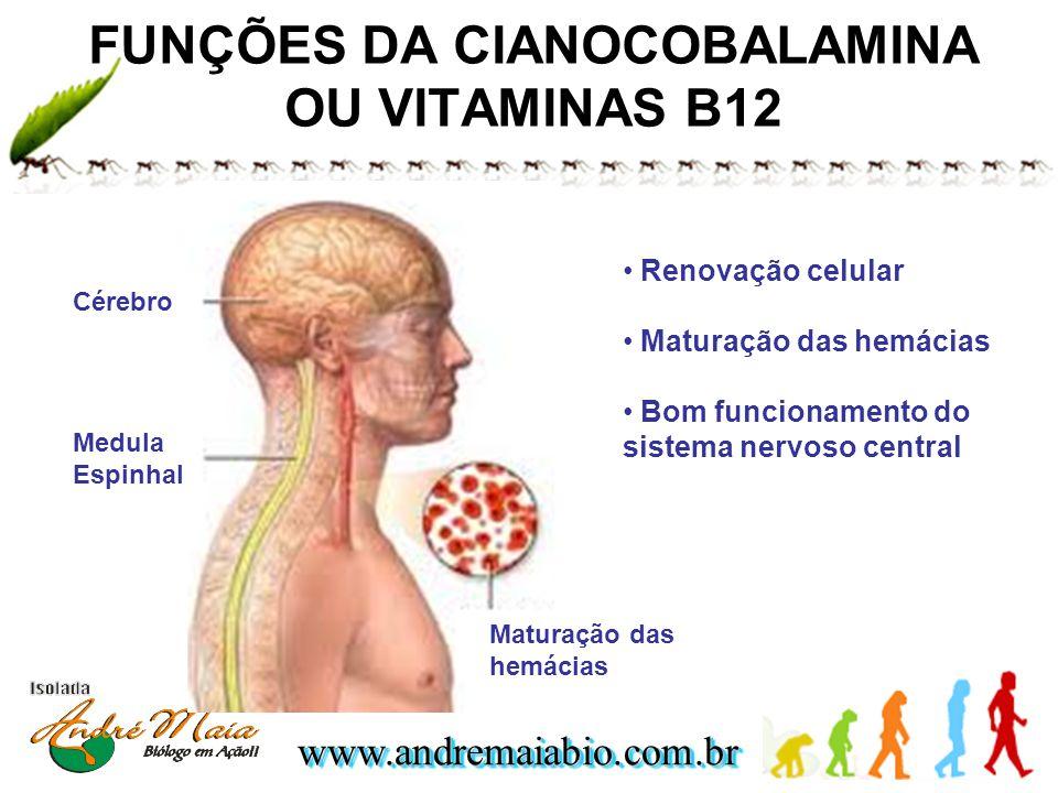 www.andremaiabio.com.brwww.andremaiabio.com.br FUNÇÕES DA CIANOCOBALAMINA OU VITAMINAS B12 Cérebro Medula Espinhal Maturação das hemácias Renovação ce