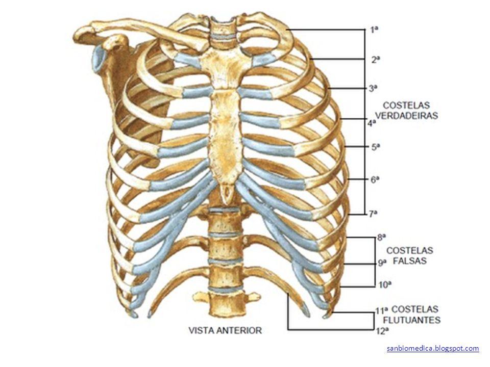 sanbiomedica.blogspot.com
