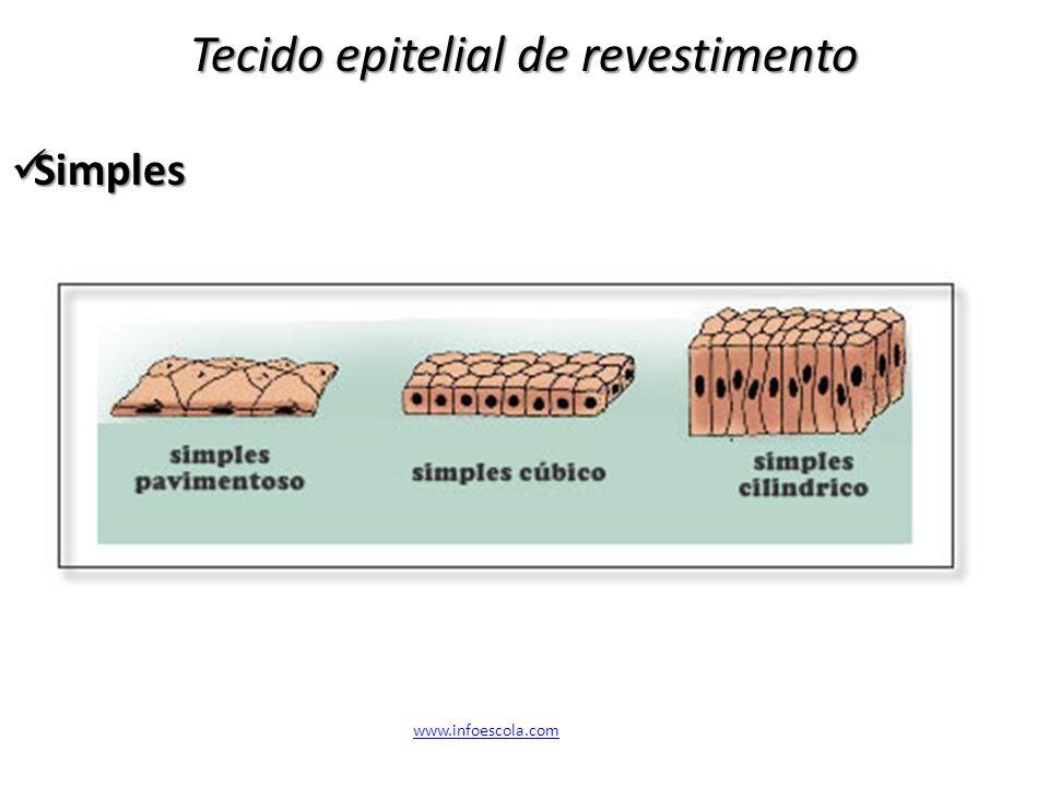 Tecido epitelial de revestimento Simples Simples www.infoescola.com