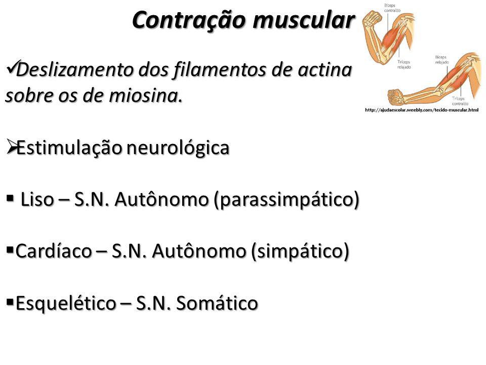 Contração muscular Deslizamento dos filamentos de actina sobre os de miosina. Deslizamento dos filamentos de actina sobre os de miosina. Estimulação n