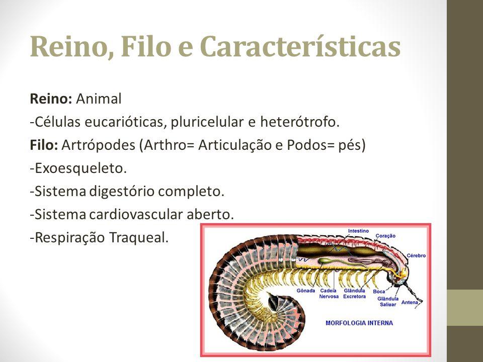 Reino, Filo e Características Reino: Animal -Células eucarióticas, pluricelular e heterótrofo. Filo: Artrópodes (Arthro= Articulação e Podos= pés) -Ex