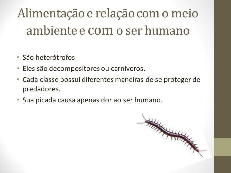 Alimentação e relação com o meio ambiente e com o ser humano São heterótrofos Eles são decompositores ou carnívoros. Cada classe possui diferentes man
